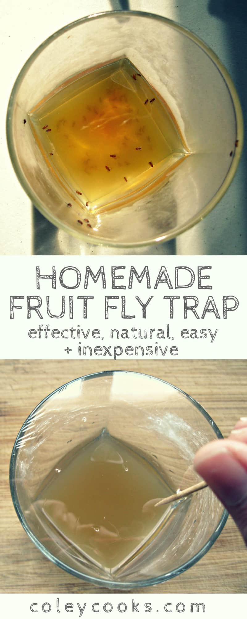 HOMEMADE FRUIT FLY TRAP | All natural fruit fly trap made using common kitchen ingredients. Effective, easy and inexpensive! . #easy #fruitflies #allnatural #DIY | ColeyCooks.com