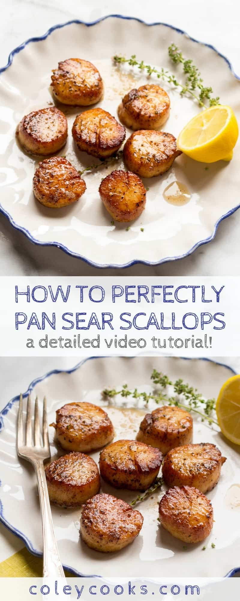 PAN SEARED SCALLOPS   Easy video tutorial on how to perfectly pan sear scallops! This simple technique produces scallops that are browned and caramelized on the outside, tender and perfectly cooked in the middle. #paleo #seafood #glutenfree   ColeyCooks.com