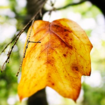 A close up of an autumn leaf on a branh.