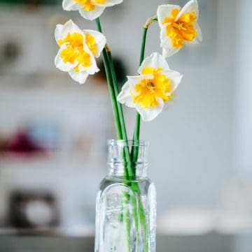 A bouquet of daffodils in a glass vase filled with water
